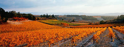 Vineyards In The Late Afternoon Autumn Print by Panoramic Images