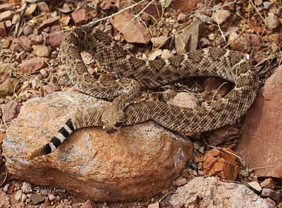 Diamondback Digital Art - Western Diamondback Rattle Snake by Tom Janca