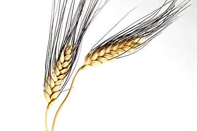 Nourishment Photograph - Wheat On White by Carol Leigh