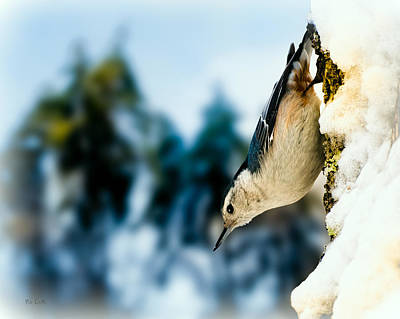 White Breasted Nuthatch In The Snow Print by Bob Orsillo