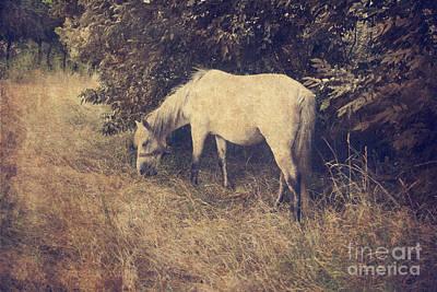 White Horse Print by Jelena Jovanovic