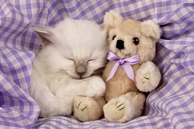 Teddybear Photograph - White Sleeping Cat by Greg Cuddiford