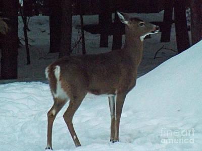 White Tail Deer Print by Brenda Brown