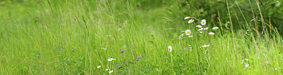 Wildflowers In A Field, Gooseberry Print by Panoramic Images