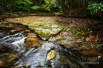 Williams River Headwaters Print by Thomas R Fletcher