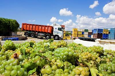 Wine Industry Print by Photostock-israel