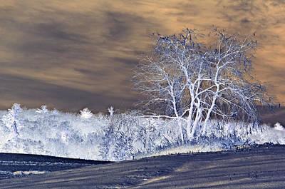 Winter Blues Print by Susan Leggett
