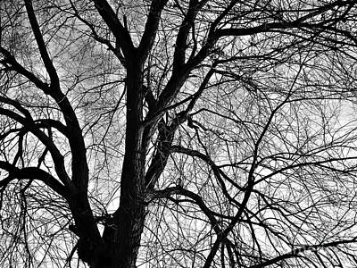 Neurotic Images Photograph - Winter by Chalet Roome-Rigdon