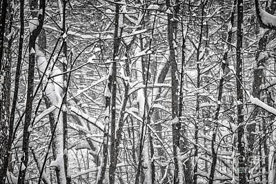 Snowstorm Photograph - Winter Forest Abstract by Elena Elisseeva
