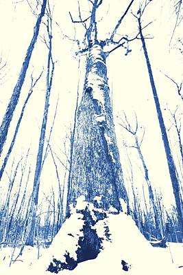 Winter Forest Original by Dan Sproul
