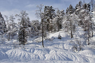 Sun Photograph - Winter Forest by Gry Thunes