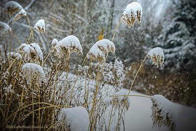 Rural Photograph - Winter Ice Storm by LeeAnn McLaneGoetz McLaneGoetzStudioLLCcom