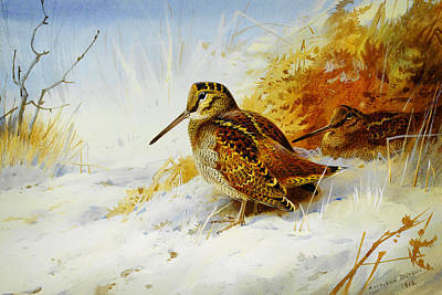 Woodcock Painting - Winter Woodcock  by Celestial Images