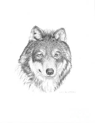 Wolves Drawing - Wolf-1 by Lee Updike