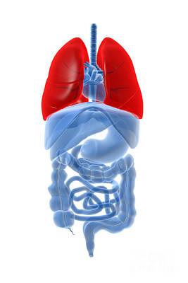 Internal Organs Digital Art - X-ray Image Of Internal Organs by Stocktrek Images