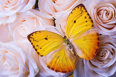 Yellow Wings Print by Garry Gay