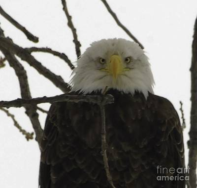 Eagle Photograph - You Looking At Me by Robert Smice