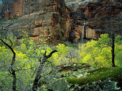 Northern Colorado Photograph - Zion National Park, Utah by Scott T. Smith