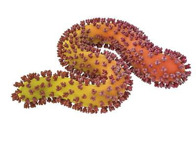 Ebola Virus Particle Print by Maurizio De Angelis