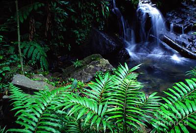 El Yunque National Forest Print by Thomas R Fletcher