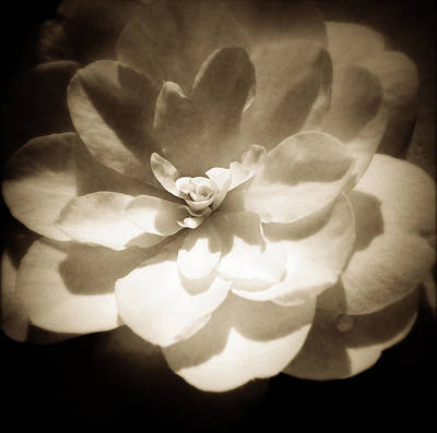 Abstract Flower Photograph - Flower by Les Cunliffe