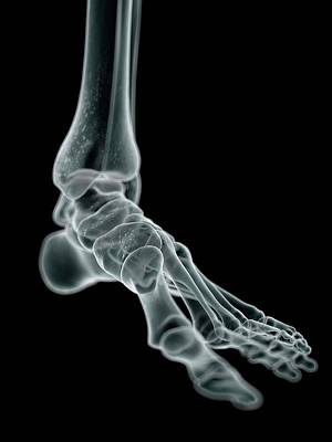 Human Foot Bones Print by Sciepro