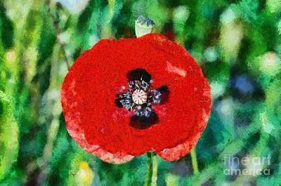 Poppy Flower Painting - Poppy Flower by George Atsametakis