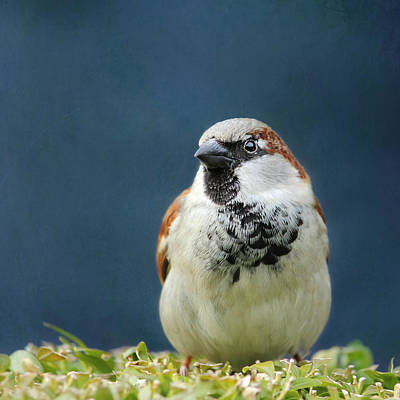 Sparrow Print by Heike Hultsch