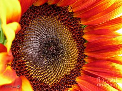 Mccombie Photograph - Sunflower From The Color Fashion Mix by J McCombie