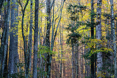 Tennessee, Great Smoky Mountains Print by Jamie and Judy Wild