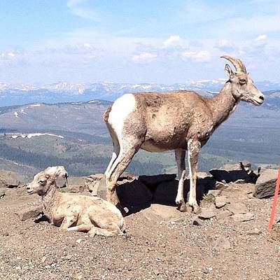 Sheep Photograph - King Of The Mountain  by Katherine Stevens