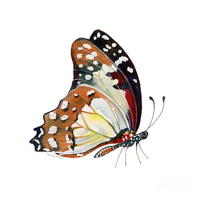 102 Perched White Lady Butterfly Print by Amy Kirkpatrick