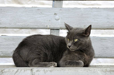 Benches Photograph - Cat In Hydra Island by George Atsametakis