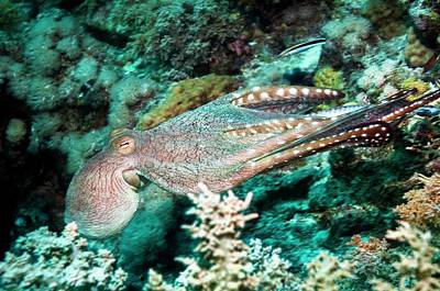 Octopus Photograph - Day Octopus by Georgette Douwma