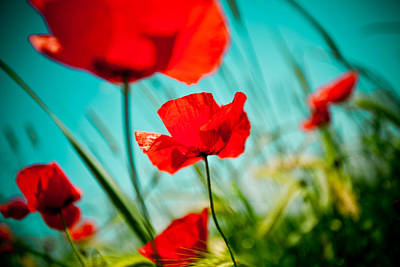 Poppy Field And Sky Print by Raimond Klavins