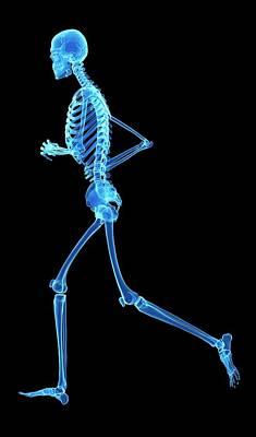 Skeletal System Of Jogger Print by Sebastian Kaulitzki