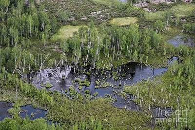 Tunguska Forest Print by RIA Novosti
