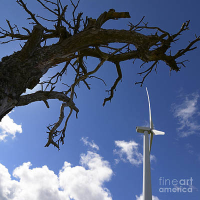 Bare Trees Photograph - Wind Turbine by Bernard Jaubert