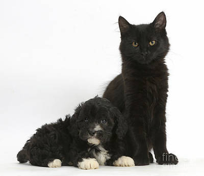 House Pet Photograph - Kitten And Puppy by Mark Taylor