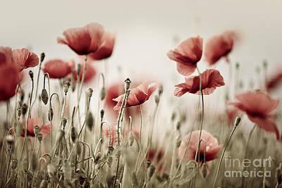 Background Photograph - Poppy Dream by Nailia Schwarz