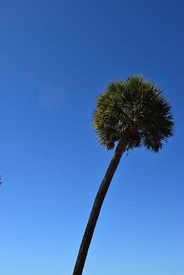 Sanibel Palm Print by Curtis Krusie