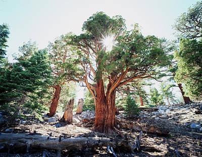 California, Sierra Nevada Mountains Print by Christopher Talbot Frank