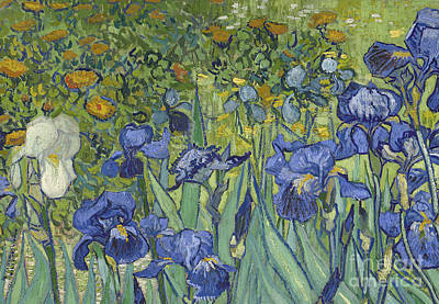 Stalk Painting - Irises by Vincent Van Gogh