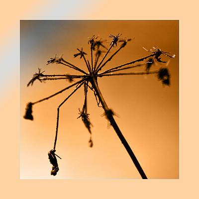 Wilted Flower  Original by Toppart Sweden