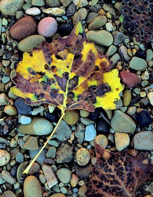 Zion National Park Photograph - Zion National Park, Utah by Scott T. Smith