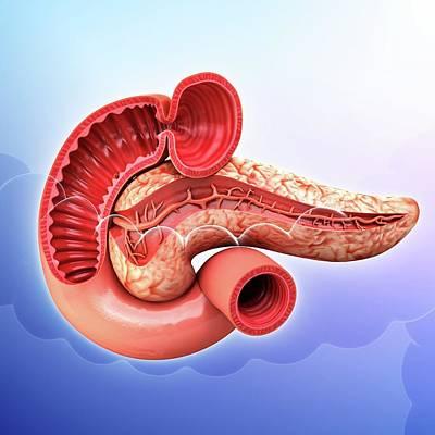 Human Pancreas Print by Pixologicstudio
