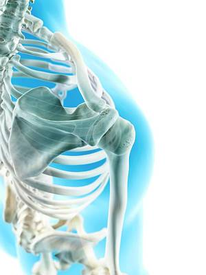 Human Joint Photograph - Human Shoulder Joint by Sciepro