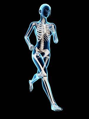 Skeletal System Of A Runner Print by Sebastian Kaulitzki