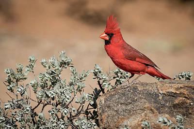 Northern Colorado Photograph - Usa, Arizona, Amado by Jaynes Gallery