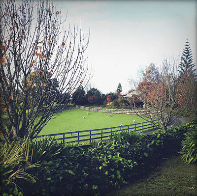 Country Scene Photograph - New Zealand by Les Cunliffe